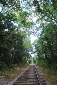 skog 1